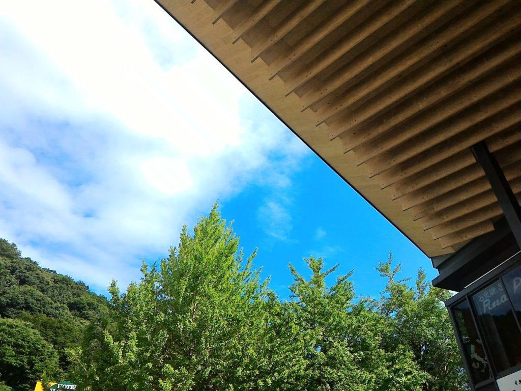 台風一過のすっきりした青空です。