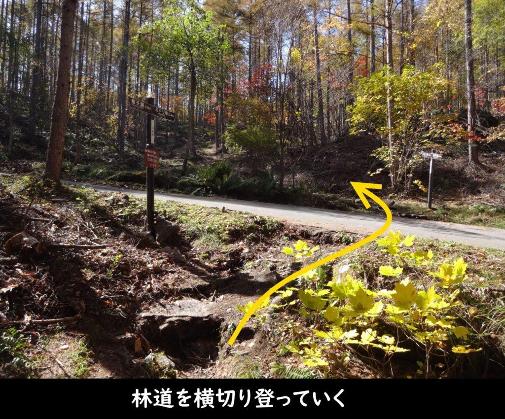 林道を横切り登っていく
