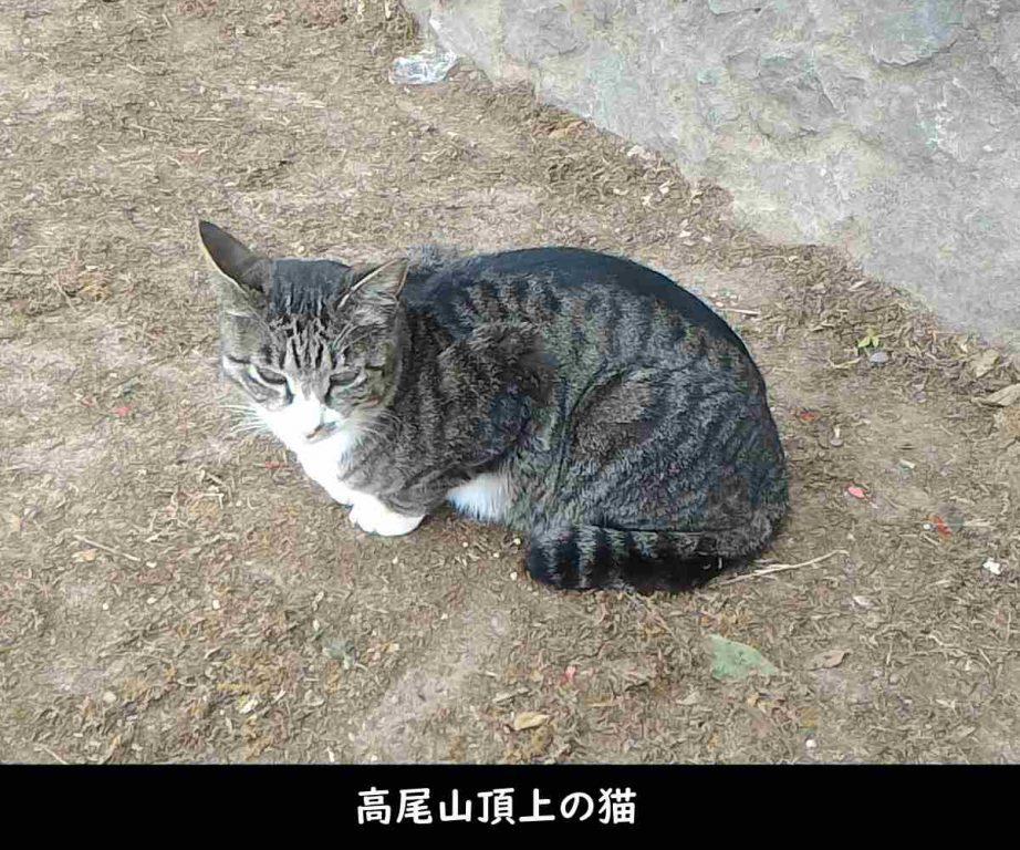 高尾山頂上の猫