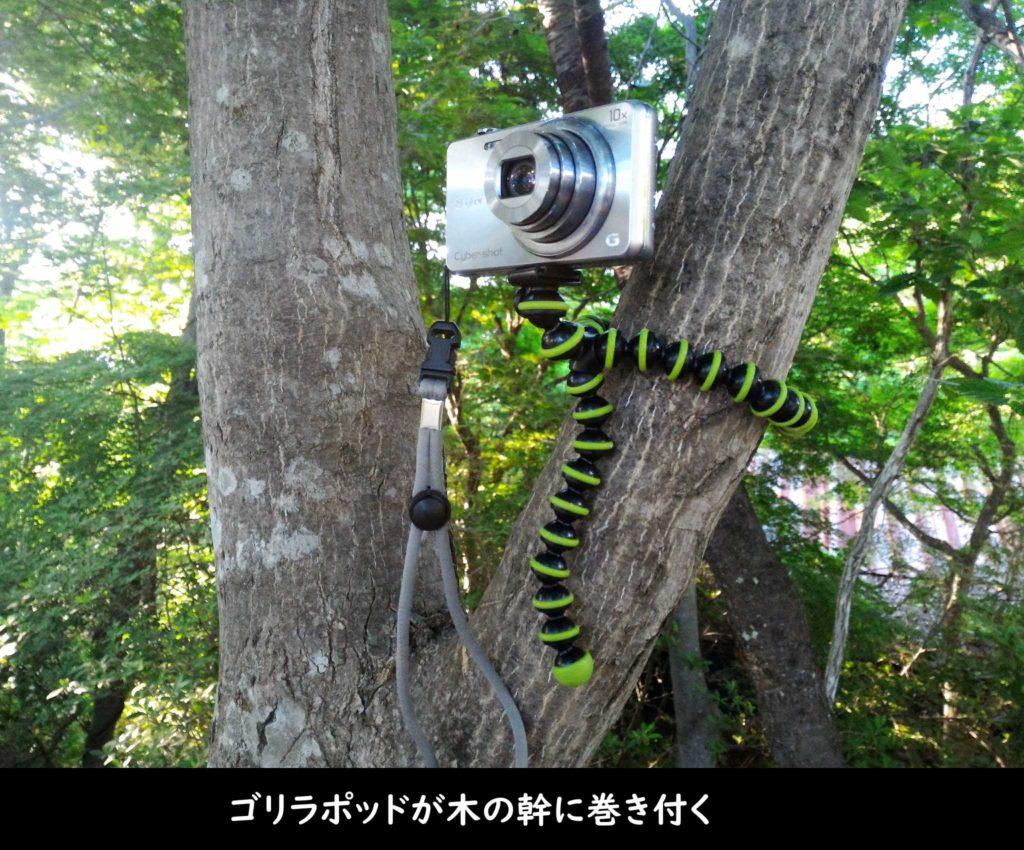 ゴリラポッドが木の幹に巻き付く