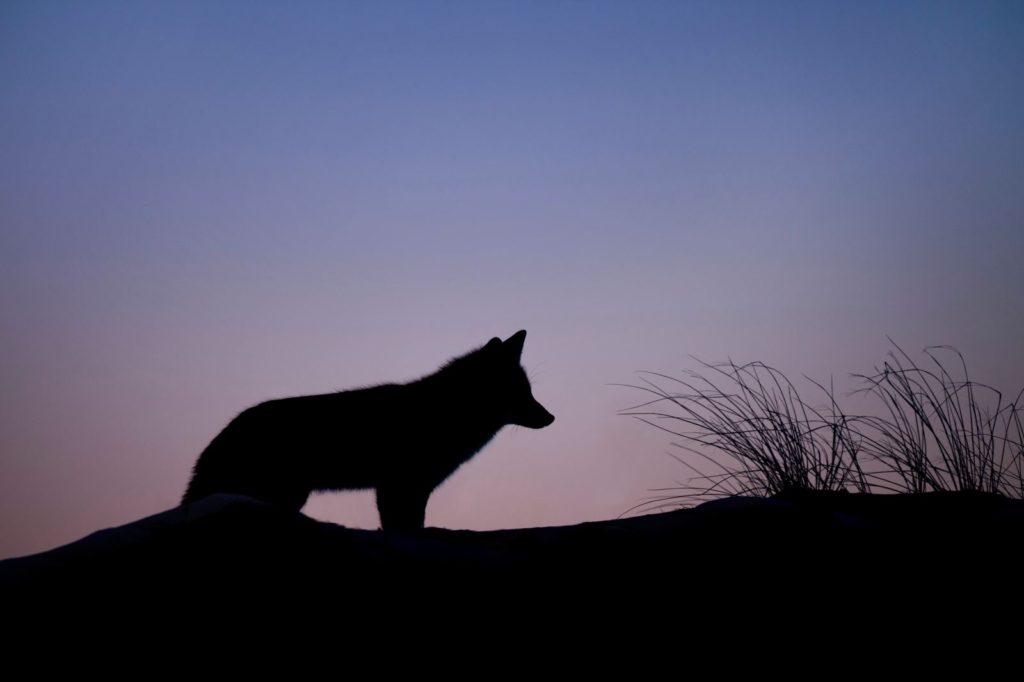 砂漠で飢えた野犬の群れに囲まれたときマグライトが役に立った